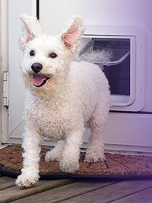 Peninsula Dog Doors Frankston Dog Doors Peter 0408 802 139
