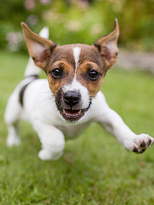 Peninsula Sliding Dog Doors Free Quotes Call Peter 0408 802 139